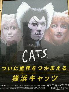 100522cats1.jpg